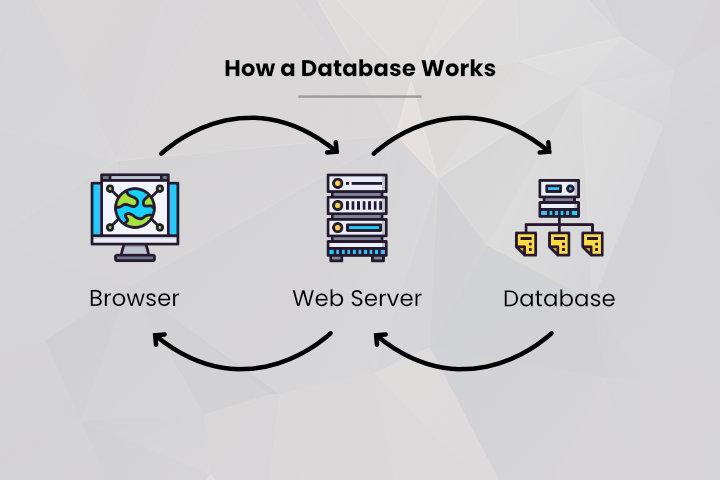 How WordPress Database Works